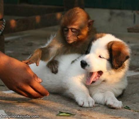 monkey and puppy monkey and puppy monkey pictures