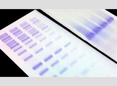 DNAzure® Blue Nucleic Acid Gel Stain, 100X | Biotium Nitric Acid Msds