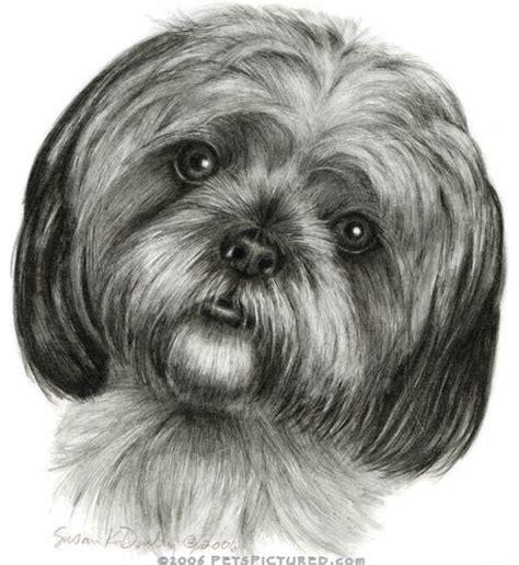 shih tzu drawing easy plus de 1000 id 233 es 224 propos de pencil animals sur comment dessiner