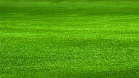 Der Perfekte Rasen by Mit Dieser Rasenpflege Wird Der Rasen Sch 246 N Dicht Und
