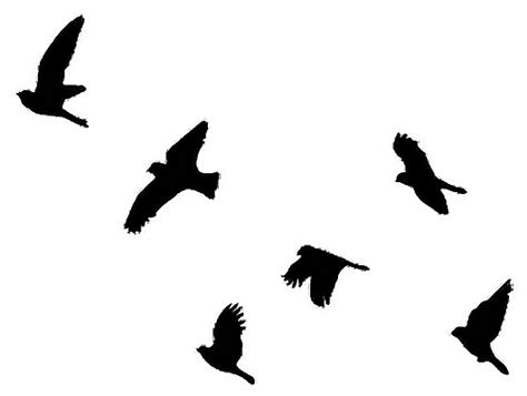 birds png black sticker photography freetoedit