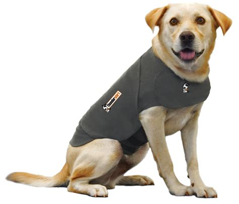 thundershirts for dogs a thundershirt does it prevent anxiety the pet product guru