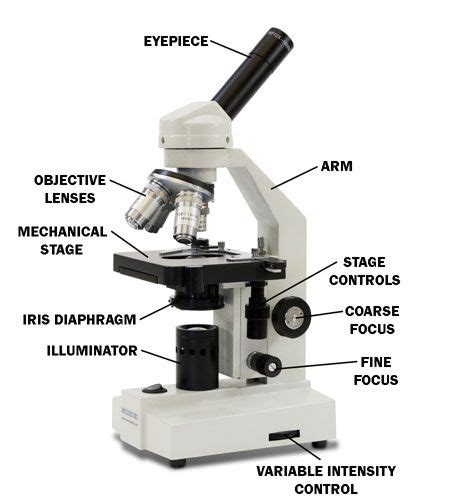 Function Of Coarse Adjustment Knob In Microscope what does the coarse adjustment knob on a microscope do