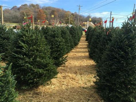 christmas tree lots in williamson county franklin home page