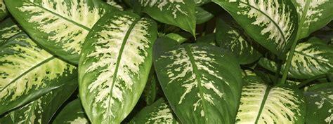 tutte le piante da appartamento riportare in casa le piante cose di casa