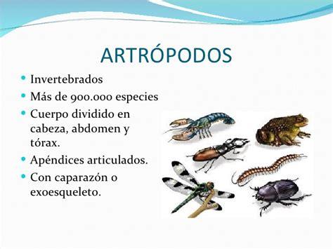 imagenes animales artropodos los artr 243 podos