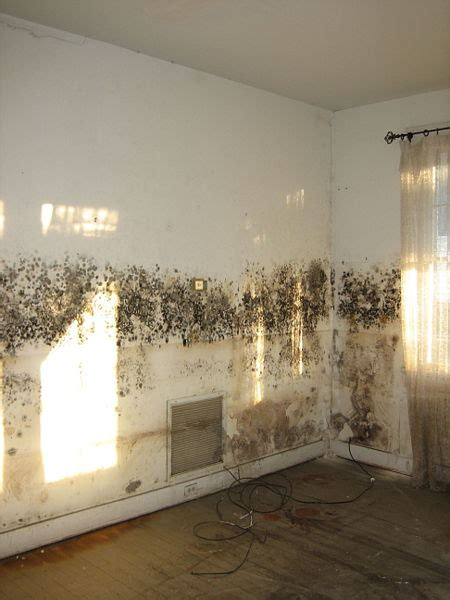 stop mould in bedroom the effects of d in houses and how to solve the problem