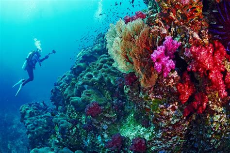 dive in best scuba diving in thailand dive you just can t miss
