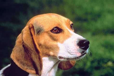 are dogs mammals 9 of the world s deadliest mammals britannica