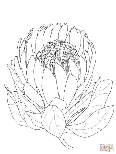 drawing page protea flower coloring page free printable coloring pages
