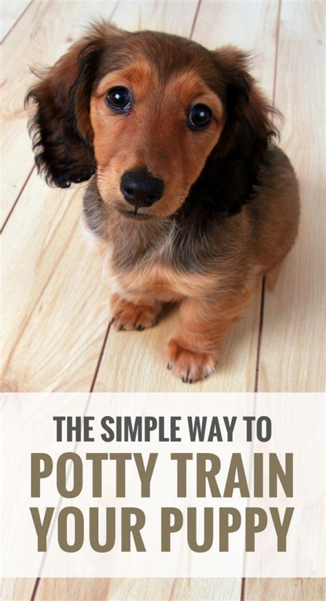 how can a puppy hold its bladder 5 simple tips for potty your puppy puppy leaks