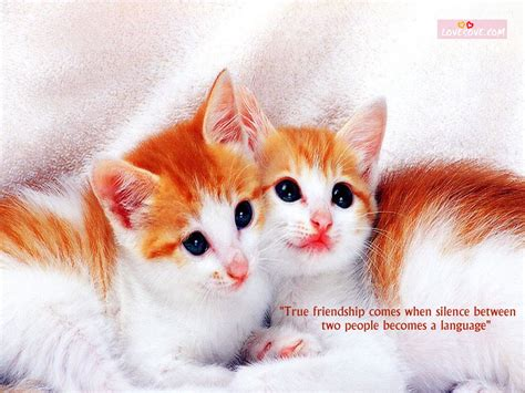 wallpaper cute friendship sweet and cute friendship wallpapers lovesove com