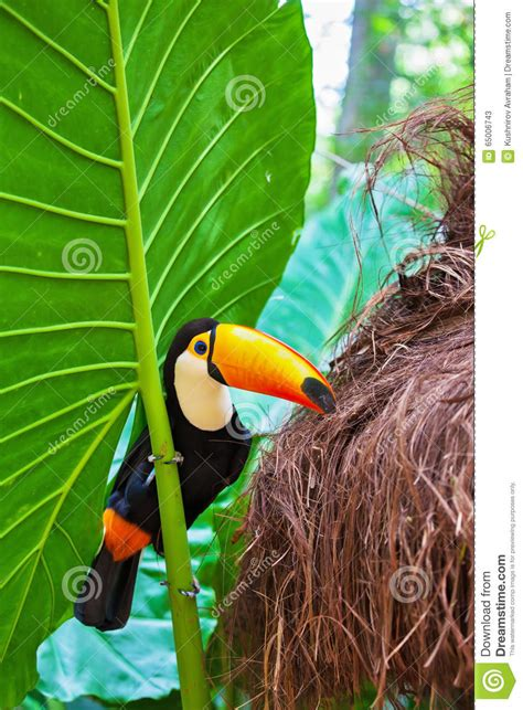 bird with colored beak colored tropical bird with large beak coloring pages