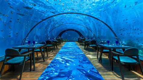 island decor with underwater tints 5 8 undersea restaurant at hurawalhi maldives is open for