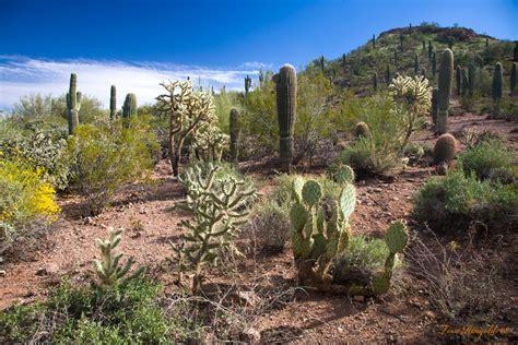 desert botanical garden panoramio photo of desert botanical garden