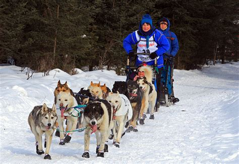 mush sled mushing a solution for high energy dogs primal pooch