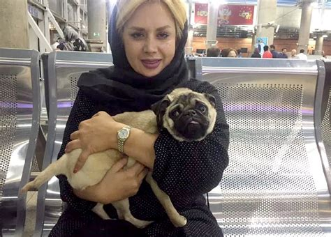 pug airport a travel ban for a pug i don t think so how an puppy made the trip from