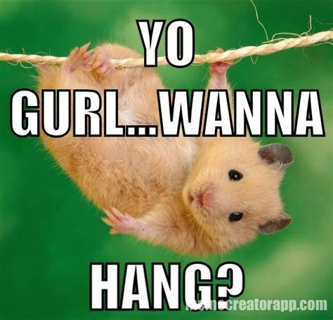 Animal Meme Generator - gangster hamster hamster memes pinterest animal and