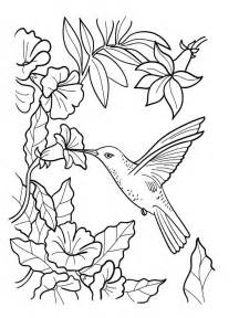 Coloring Pages Download And Print Hummingbird sketch template