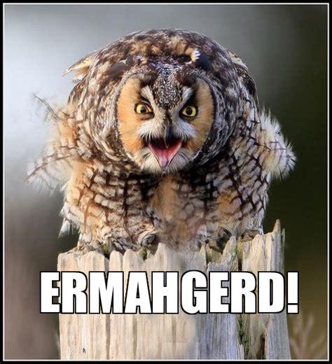 Who Owl Meme - pin funny owls meme center on pinterest