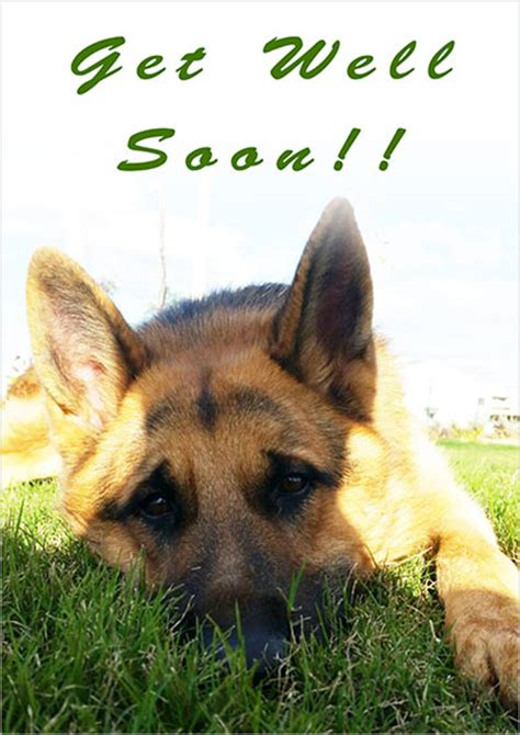 get well soon puppy printable get well cards