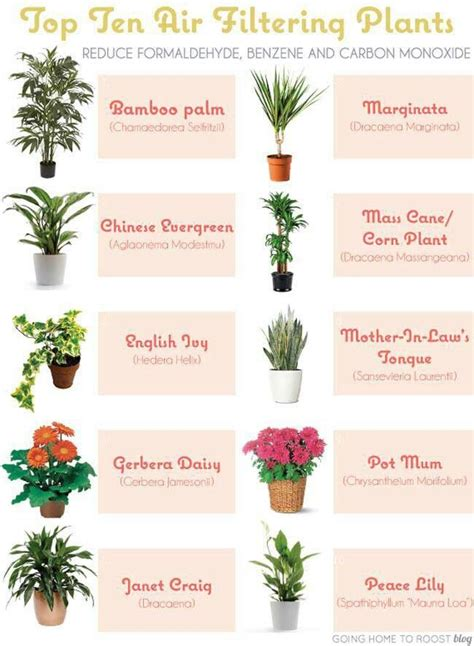 best indoor plants for low light house plants for low light flowers plants and trees