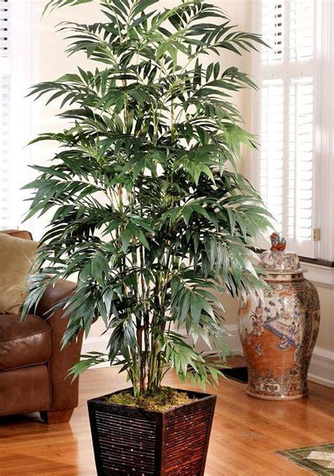 house plants no light bamboo house plant light escortsea