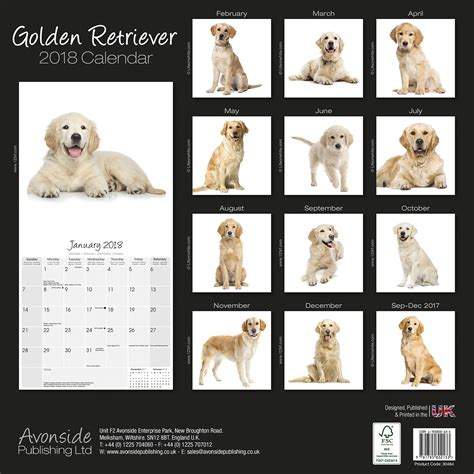 best place to buy golden retriever puppies golden retrievers calendar 2018 30464 golden retriever breeds