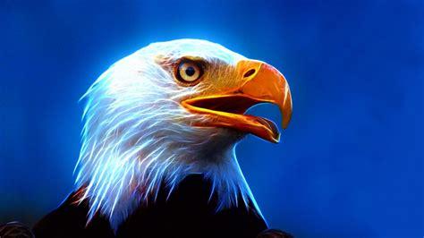 eagle ultra hd wallpaper  mobile phone  pc