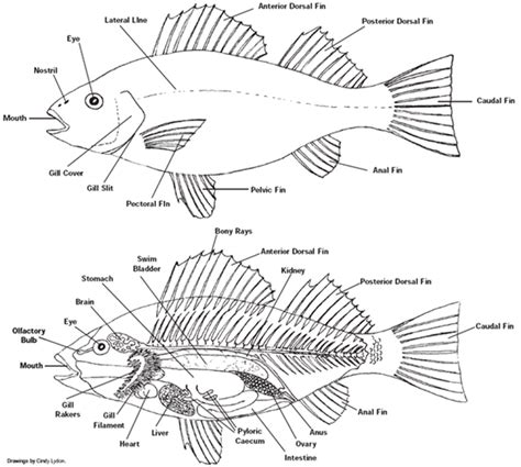 labeling a diagram fish label parts images
