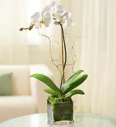 orchid care the basics indoor plant tips com