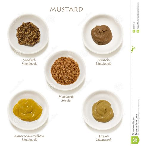 2in1 Set Jellow Mustard mustards collection stock photography image 28487842
