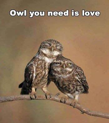 Owl Meme - 37 best owl memes images on pinterest owls barn owls