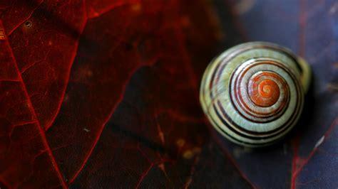 close  snail wallpaper hd wallpapers