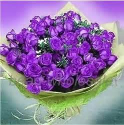 purple rose plants for sale on popscreen
