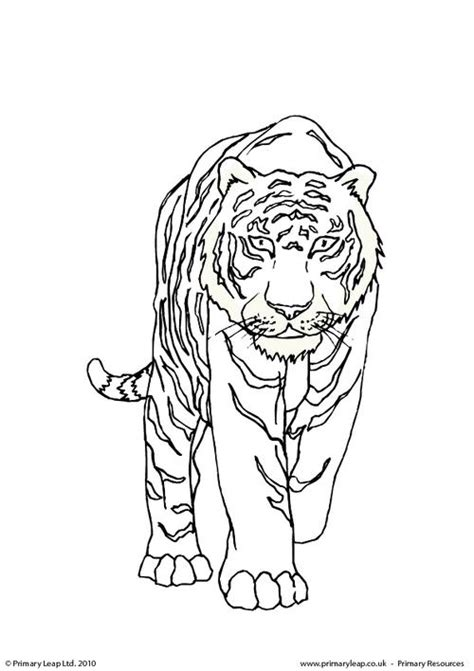 coloring page bengal tiger bengal tiger colouring page primaryleap co uk