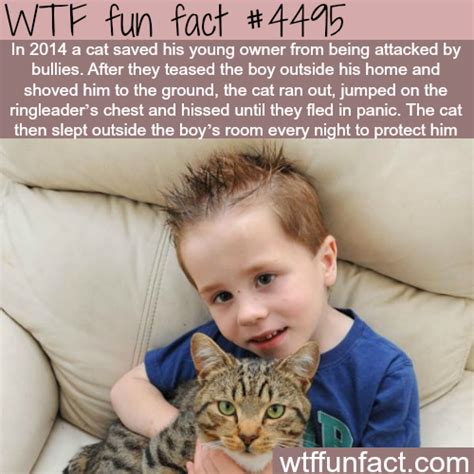 Cat Facts Meme - cat saves his young owner from bullies wtf fun facts