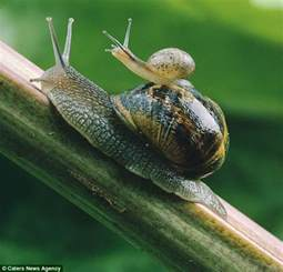 how i found the secret of stopping snails munching your