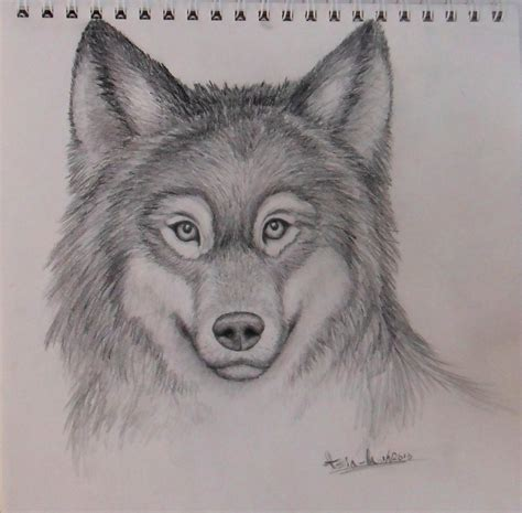 wolves drawings realistic wolf drawing crilley tutorial by yourtoast