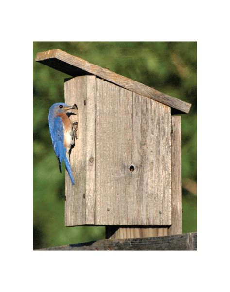 the eastern bluebird house prairie patchwork gifts