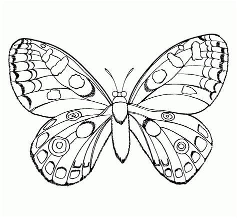imagenes de mariposas realistas galer 237 a de im 225 genes dibujos de mariposas para colorear