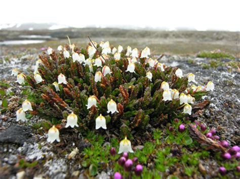 Plants Low Light flora the arctic tundra