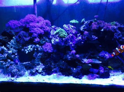 aquascape qatar tips and tricks on creating amazing aquascapes page 17