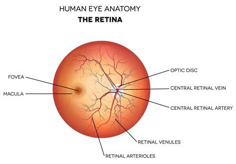 retina diagram retina farmington retina specialist glastonbury