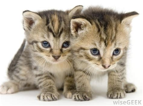 google images cats kittens google search kittens pinterest