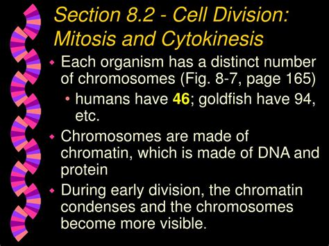 chapter 9 section 2 mitosis and cytokinesis answers ppt chapter 8 cell growth and division powerpoint