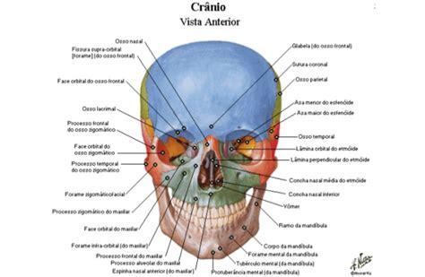 imagenes netter pdf atlas de anatomia humana https www 4shared com