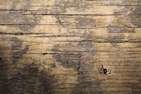beautiful wood 20 free beautiful hi res wood texture wallpaper