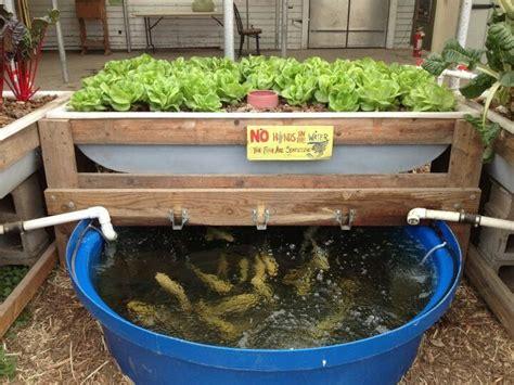 backyard hydroponics 87 best aquaponics images on pinterest aquaponics
