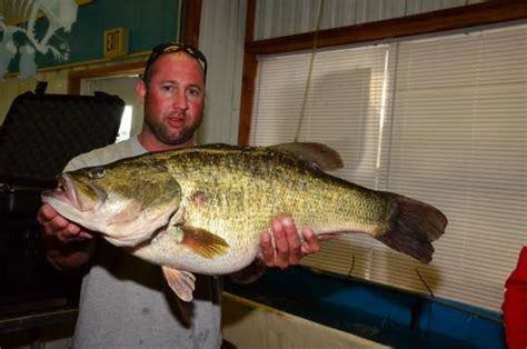 mammoth bass caught  texas lakes   afternoon